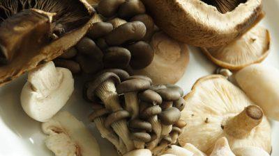 cogumelos-la-percussi